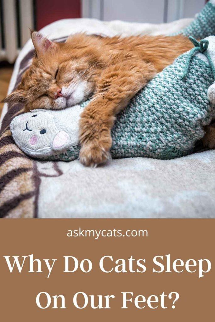 Why Do Cats Sleep On Our Feet?