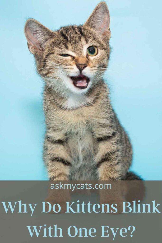 Why Do Kittens Blink With One Eye?