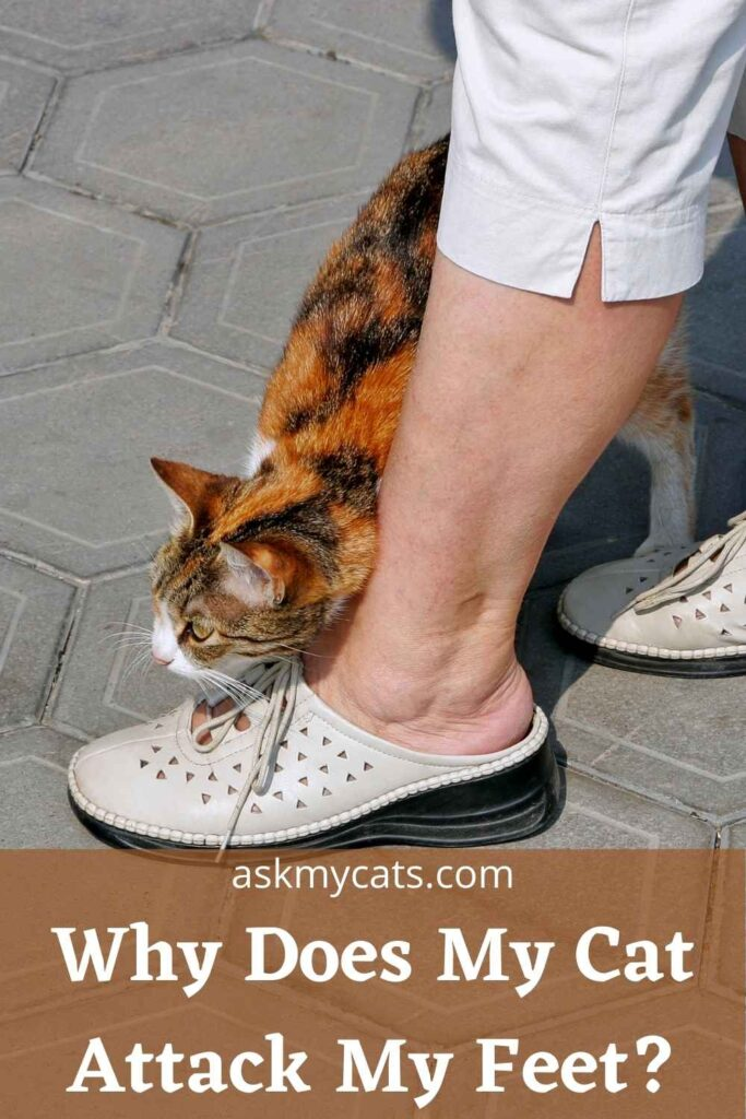 Why Does My Cat Attack My Feet?