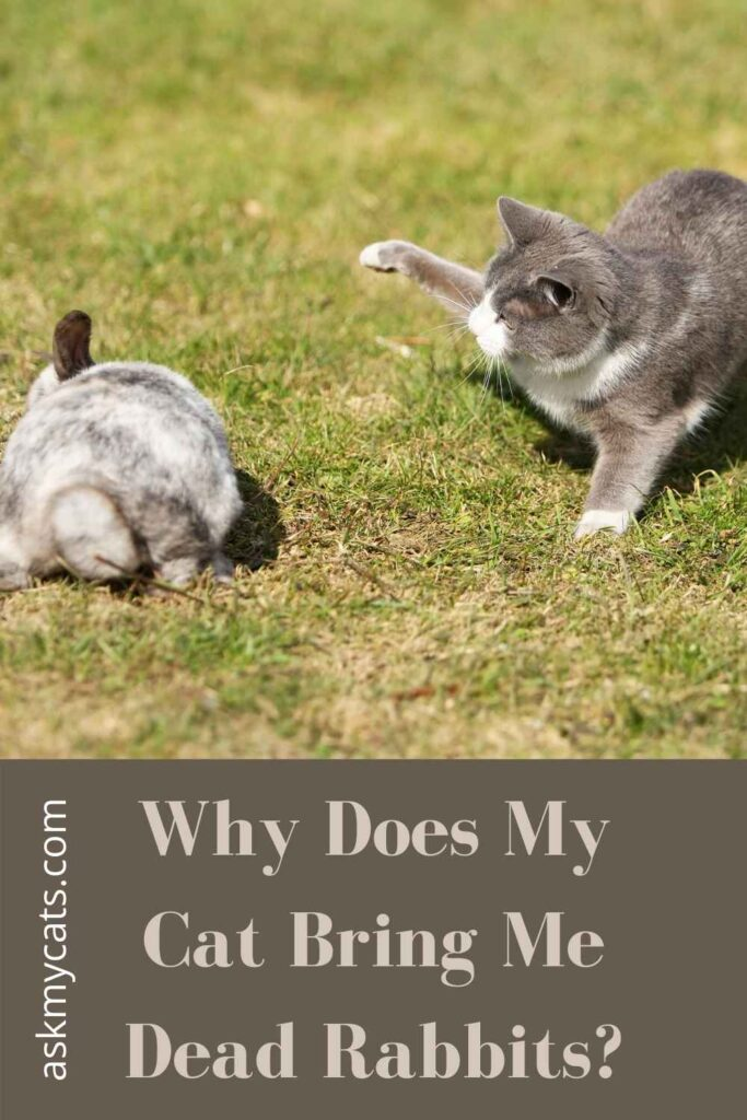 Why Does My Cat Bring Me Dead Rabbits?