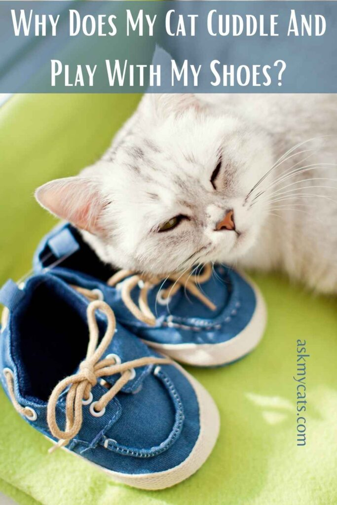 Why Does My Cat Cuddle And Play With My Shoes?