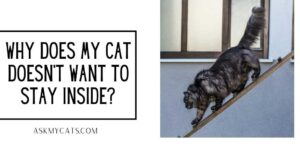 Why Does My Cat Doesn't Want To Stay Inside? Feel Free To Know!