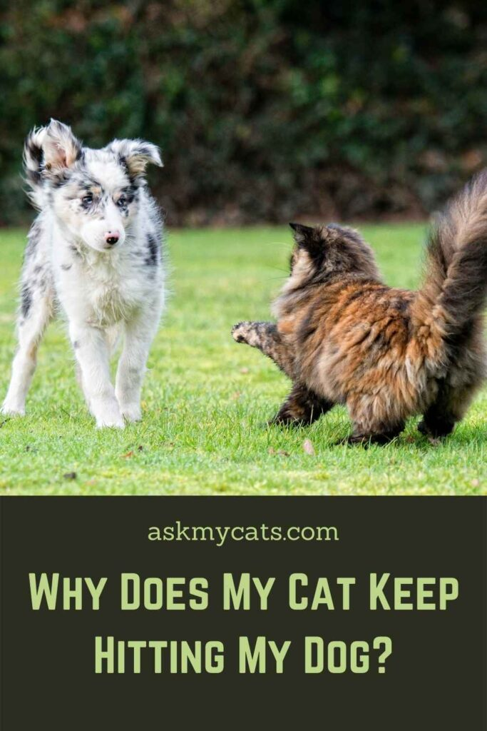 Why Does My Cat Keep Hitting My Dog?