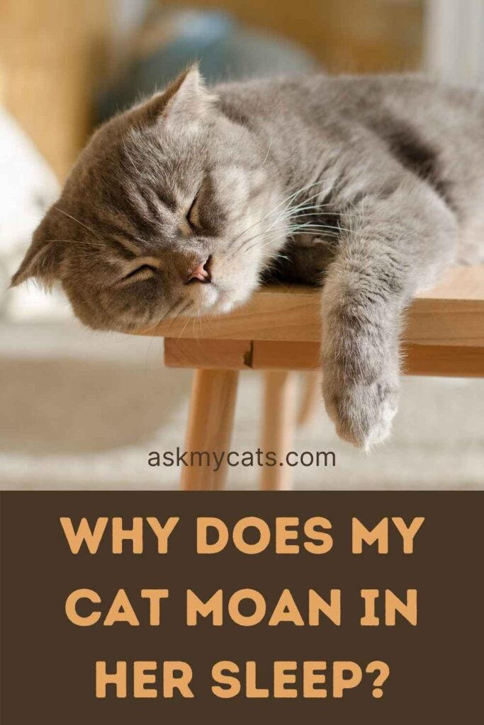 Why Does My Cat Moan In Her Sleep?