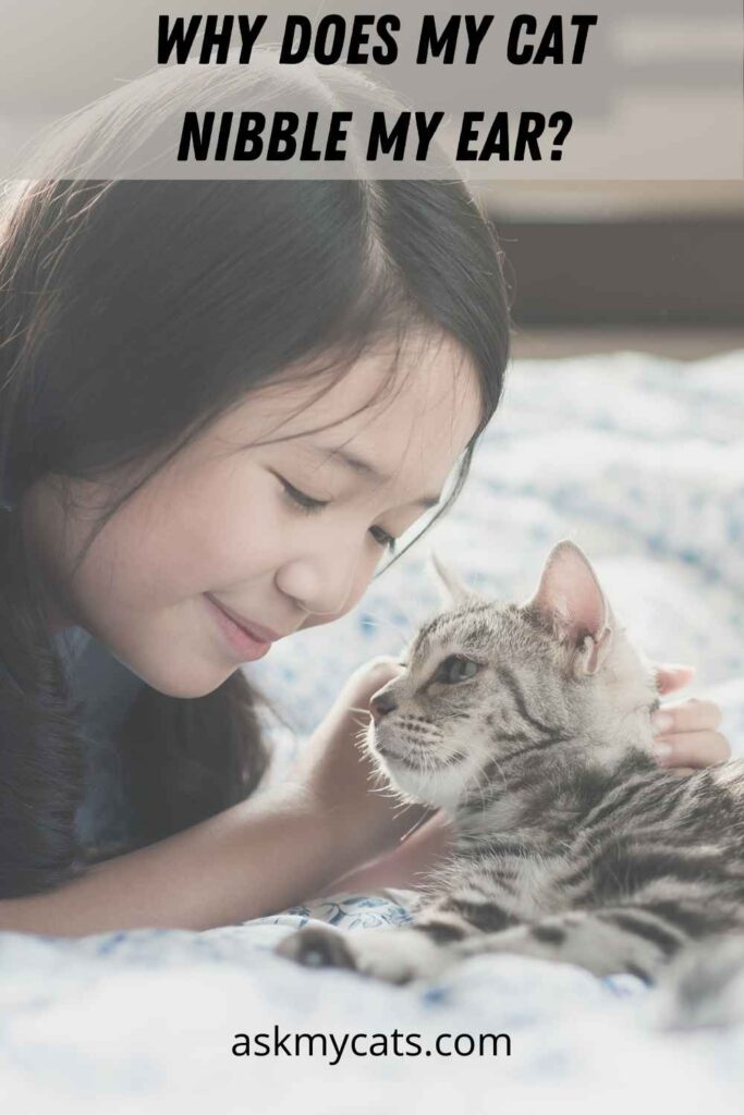 Why Does My Cat Nibble My Ear?