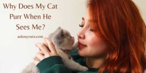 Why Does My Cat Purr When He Sees Me? Know These Funny Reasons