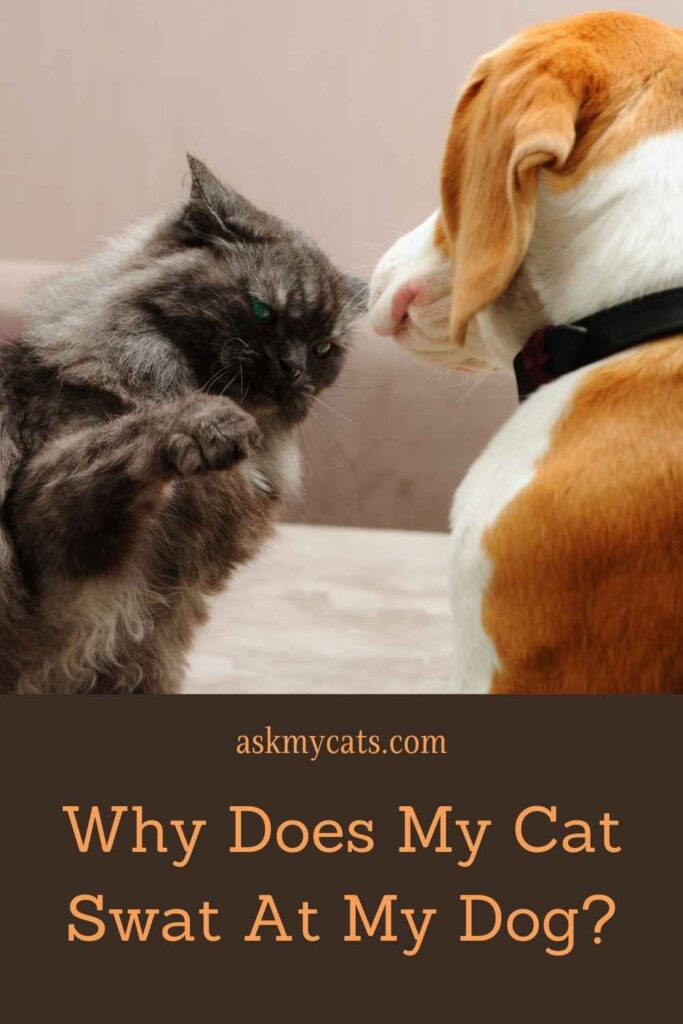 Why Does My Cat Swat At My Dog?