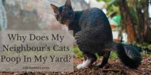 Neighbour's Cat Poops In My Yard? What To Do Now?