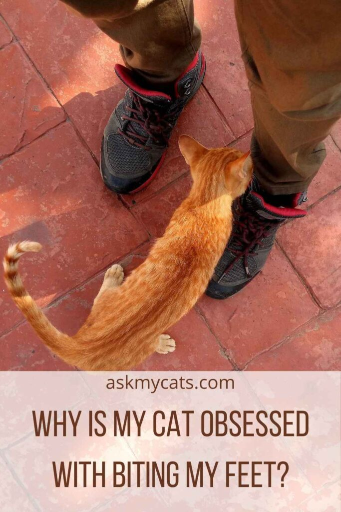 Why Is My Cat Obsessed With Biting My Feet?