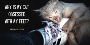 Why Is My Cat Obsessed With My Feet? Make A Check-list For All The Reasons!