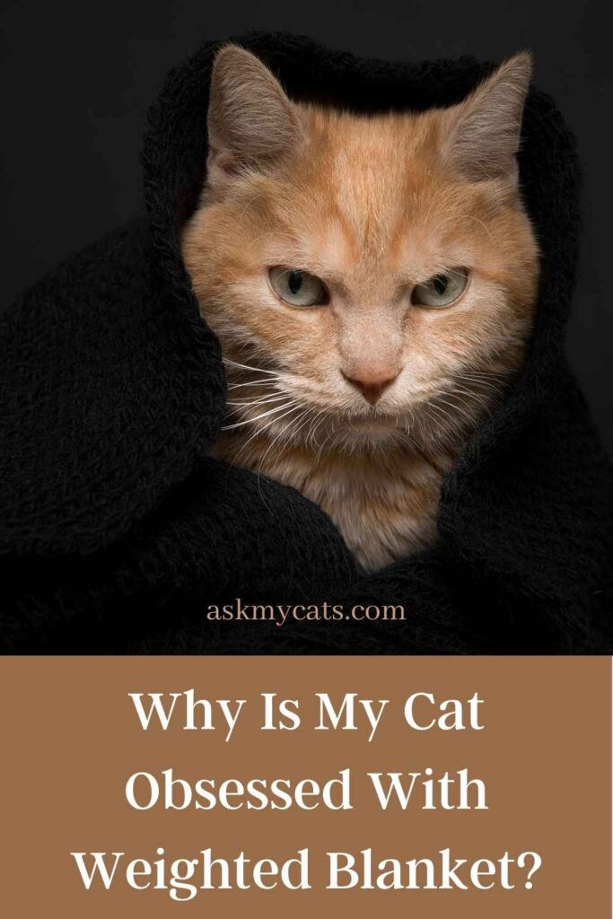 Why Is My Cat Obsessed With Weighted Blanket?
