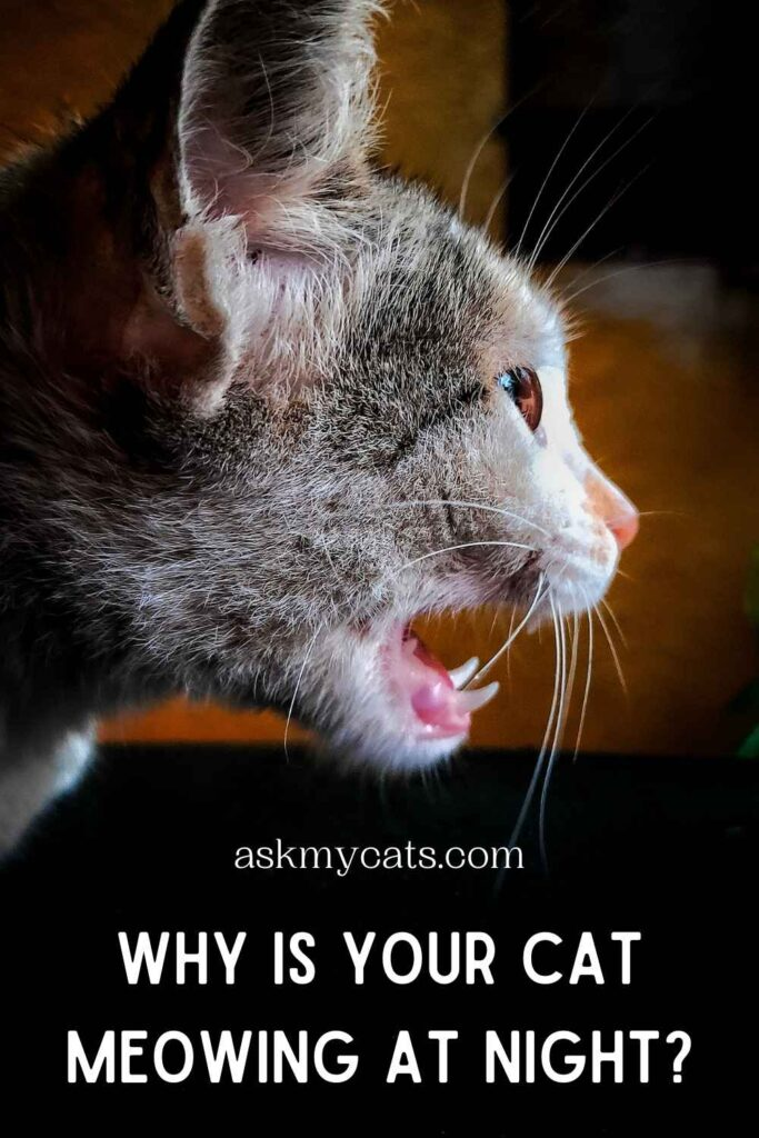 Why Is Your Cat Meowing At Night?