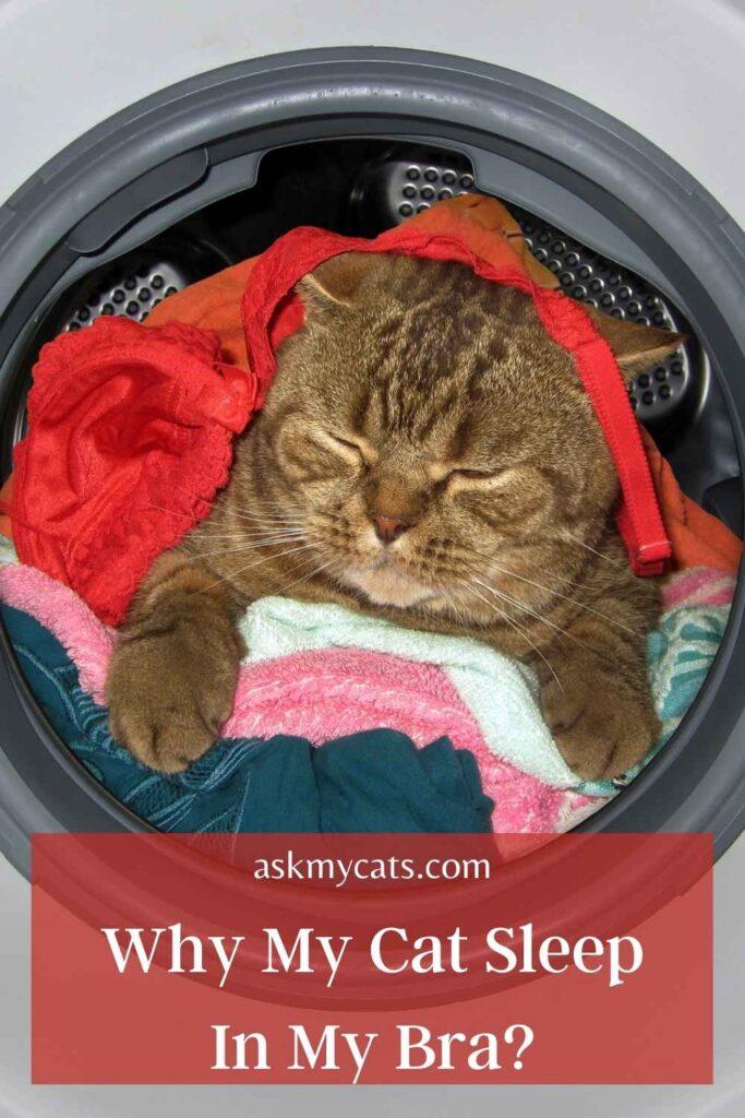 Why My Cat Sleep In My Bra?