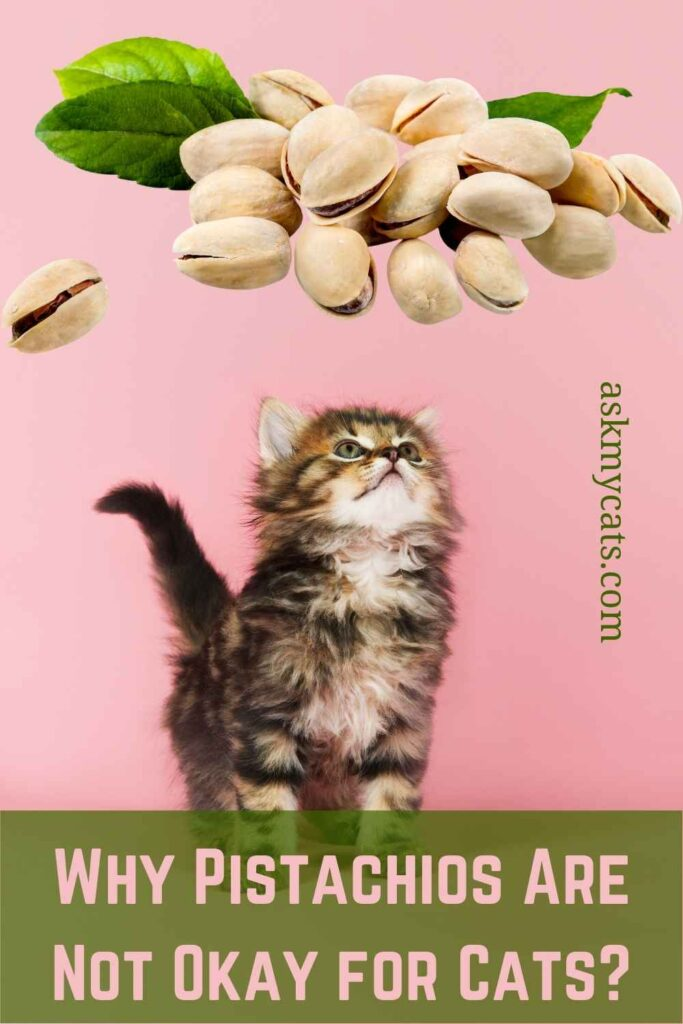 Why Pistachios Are Not Okay for Cats?
