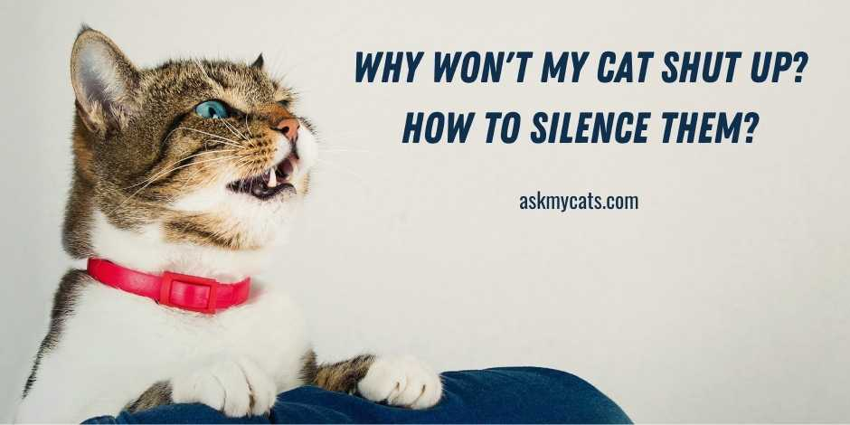 Why Wont My Cat Shut Up How To Silence Them