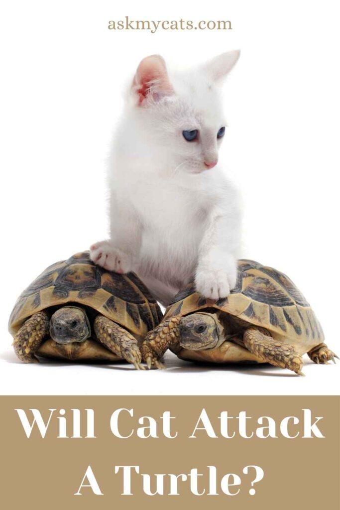 Will Cat Attack A Turtle?