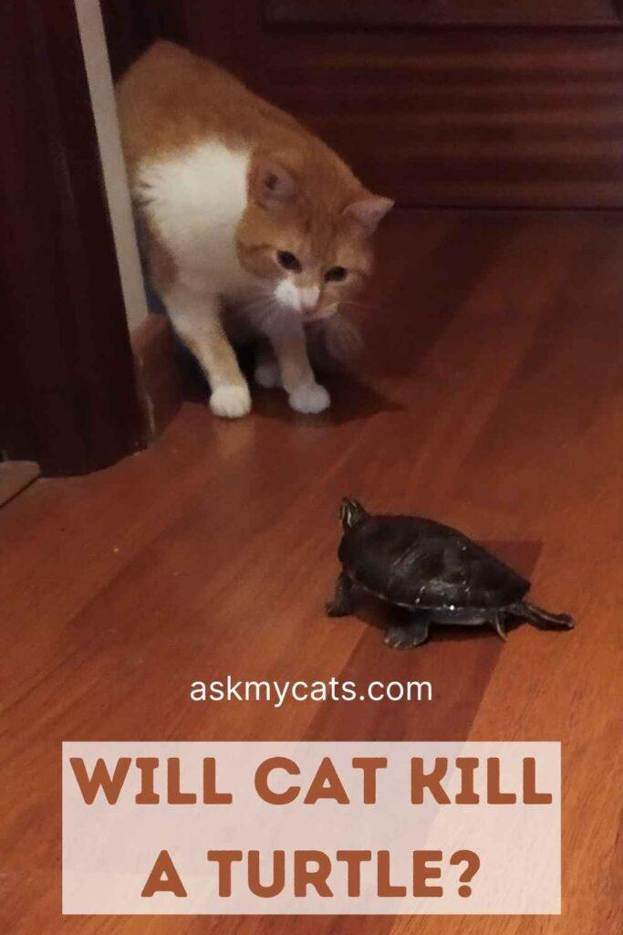 Will Cat Kill a Turtle?