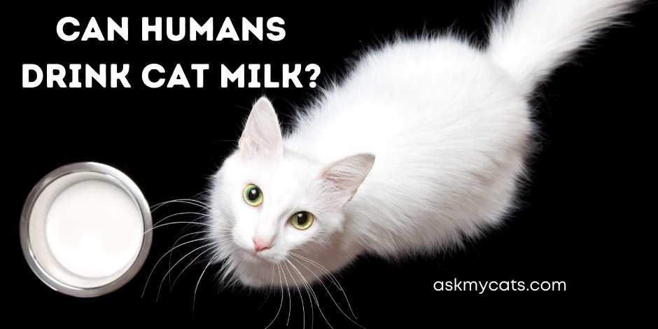Can Humans Drink Cat Milk