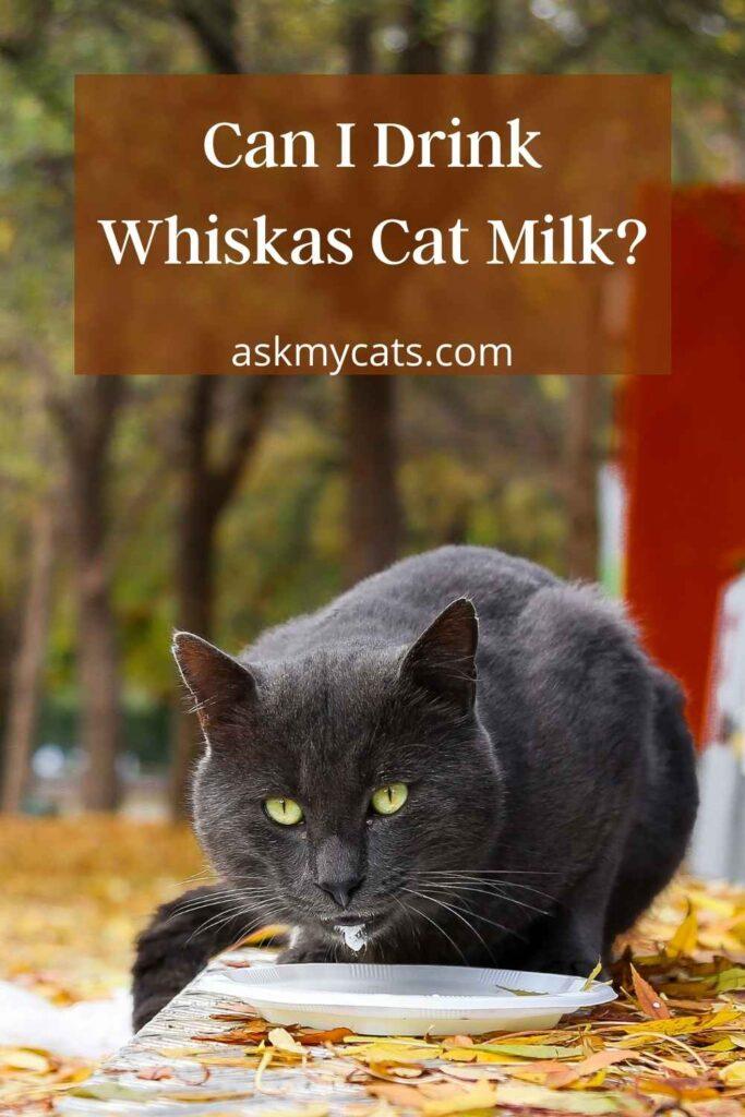 Can I Drink Whiskas Cat Milk?