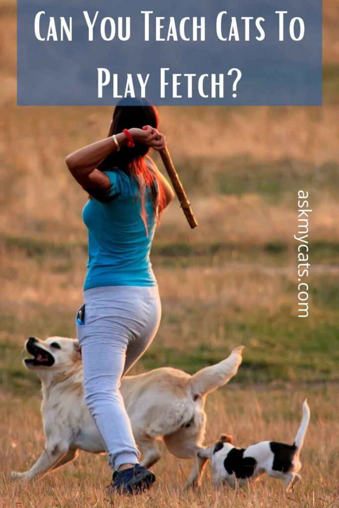 Can You Teach Cats To Play Fetch?