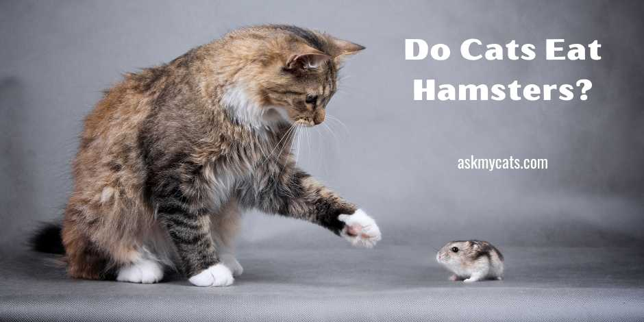 Do Cats Eat Hamsters