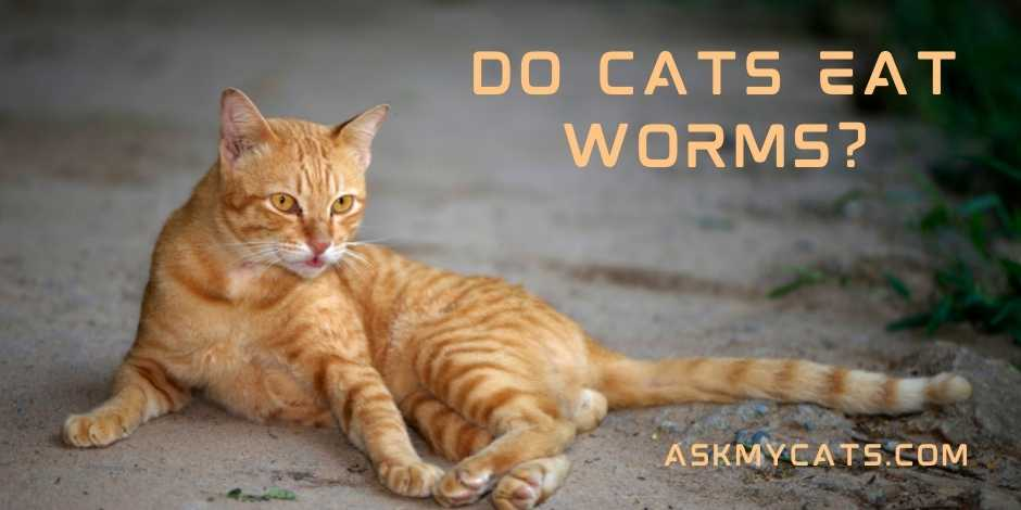 Do Cats Eat Worms