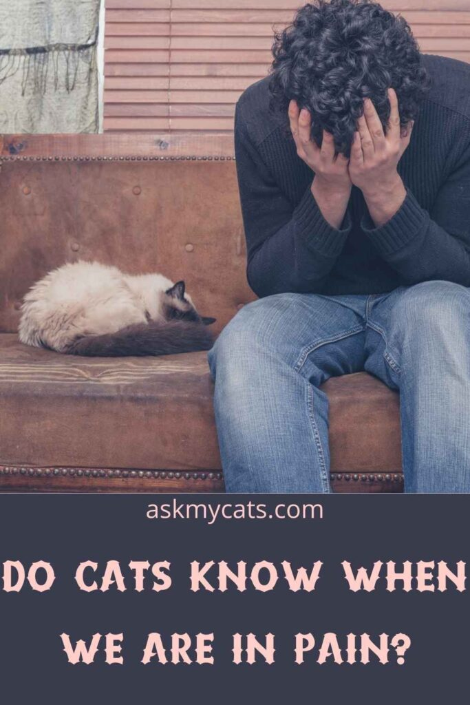 Do Cats Know When We Are In Pain?