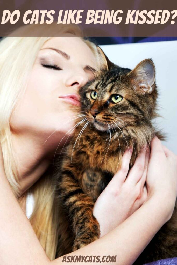 Do Cats Like Being Kissed?