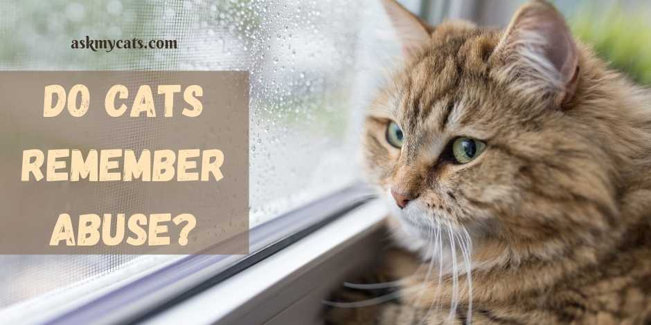 Do Cats Remember Abuse