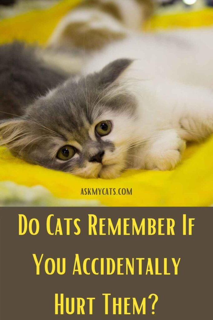 Do Cats Remember If You Accidentally Hurt Them?