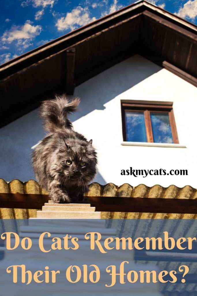 Do Cats Remember Their Old Homes?