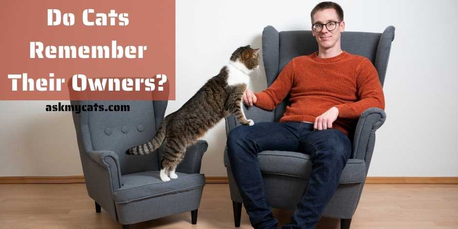 Do Cats Remember Their Owners