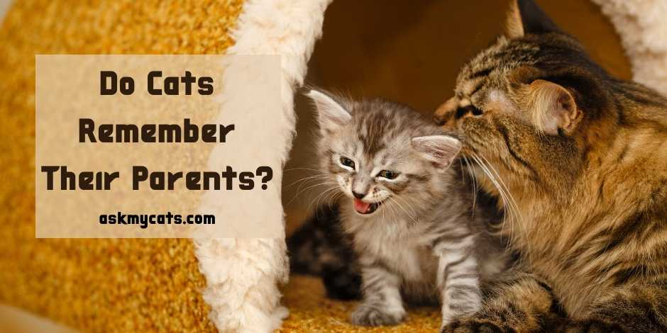 Do Cats Remember Their Parents
