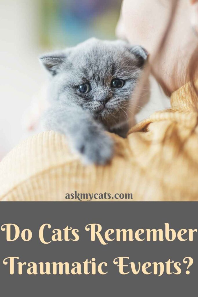 Do Cats Remember Traumatic Events?