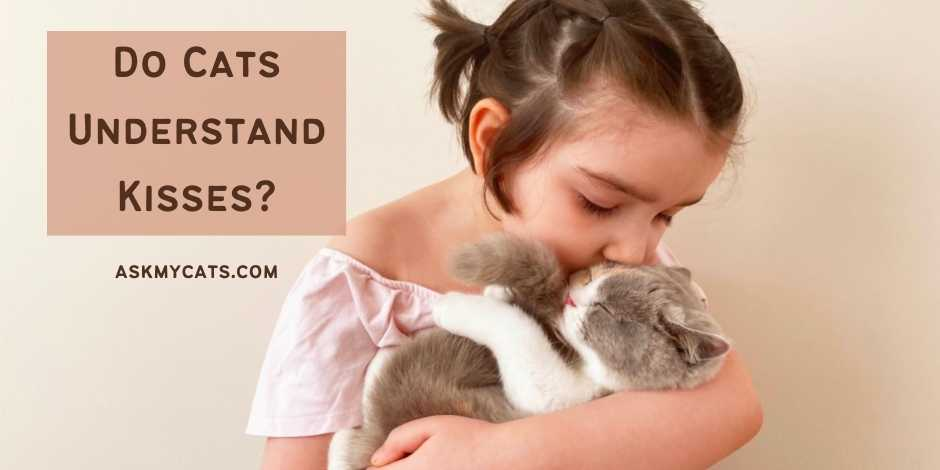 Do Cats Understand Kisses