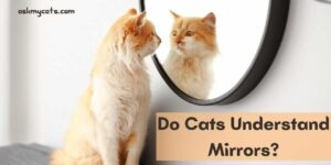 Do Cats Understand Mirrors? Do They Understand Reflections?