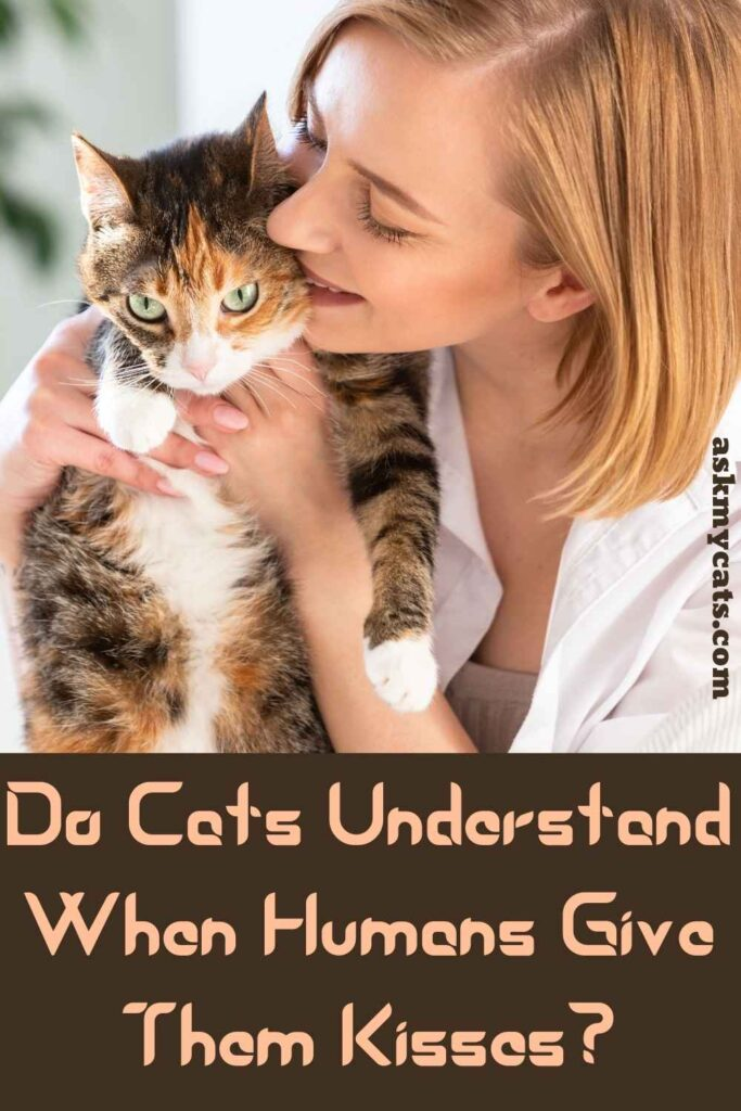 Do Cats Understand When Humans Give Them Kisses?