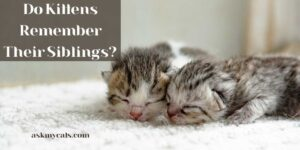 Do Kittens Remember Their Siblings? Do They Value Emotional Attachments?