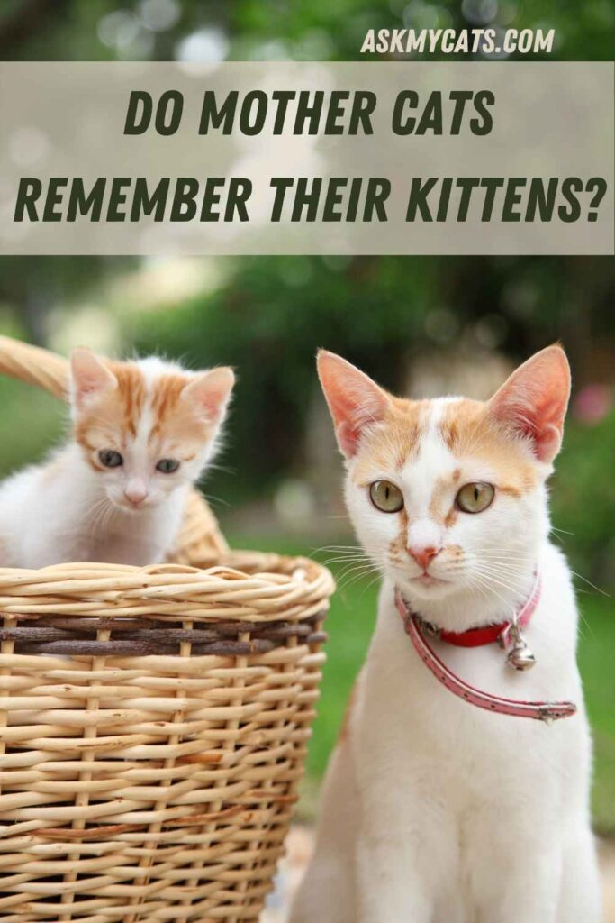 Do Mother Cats Remember Their Kittens?