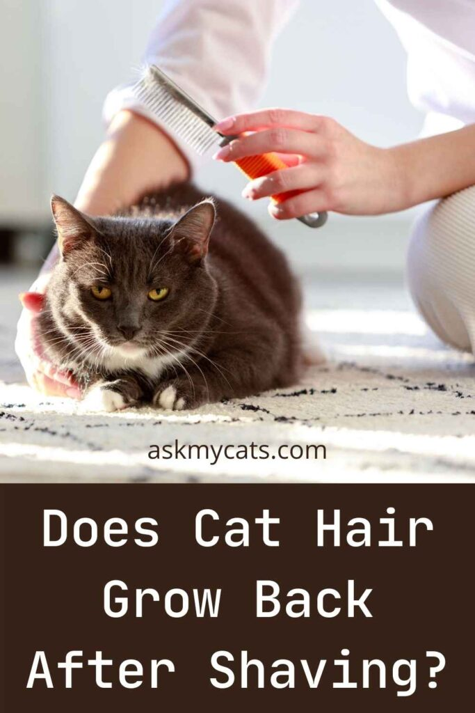 Does Cat Hair Grow Back After Shaving?