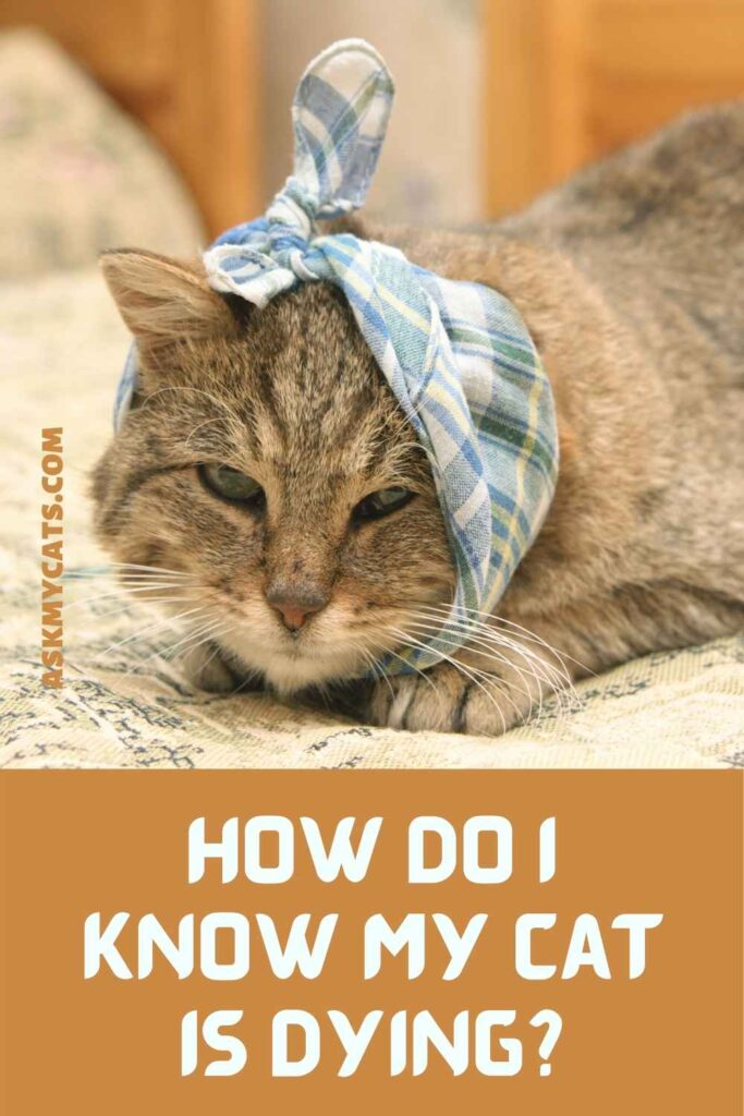 How Do I Know My Cat is Dying?