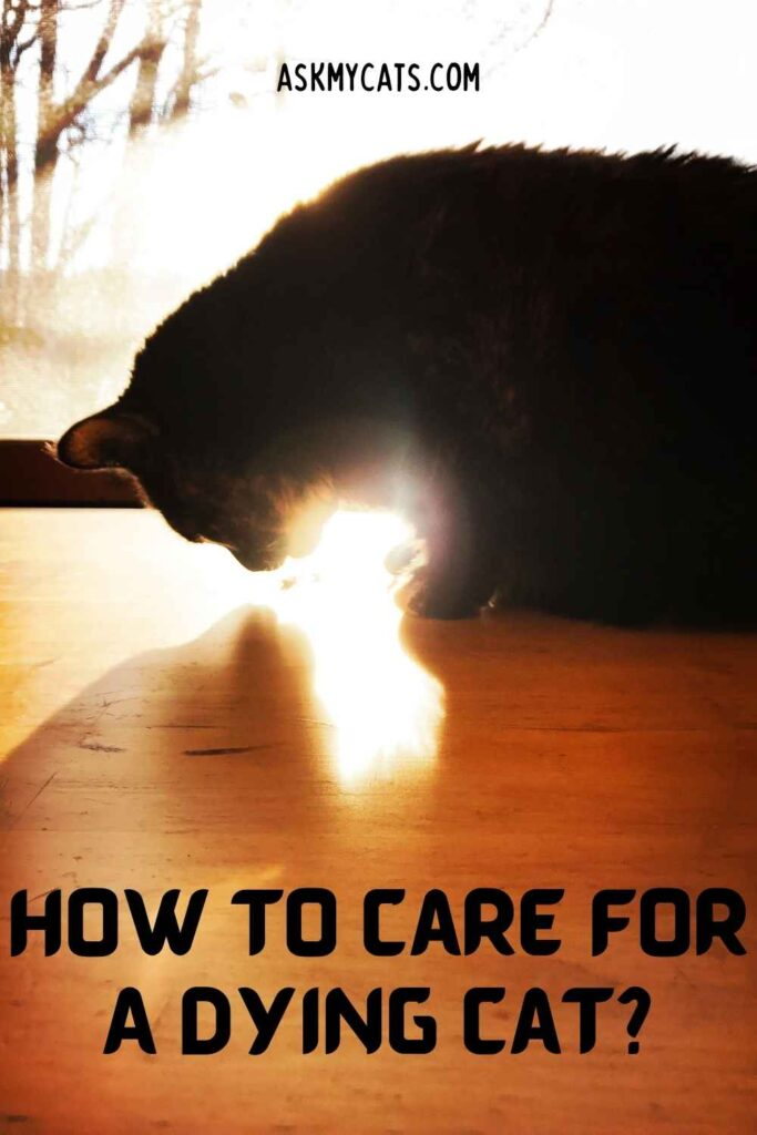 How To Care For A Dying Cat?