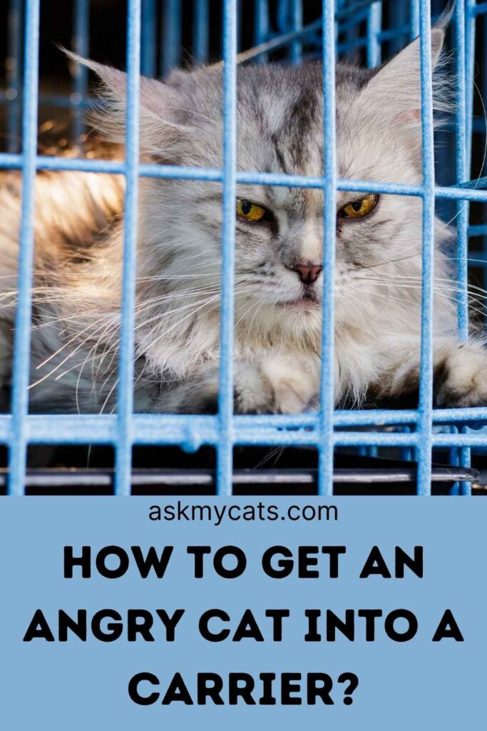 How To Get An Angry Cat Into A Carrier?