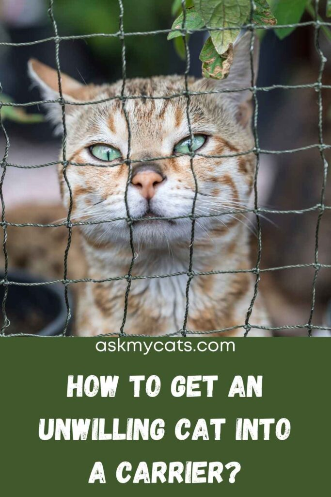 How To Get An Unwilling Cat Into A Carrier?