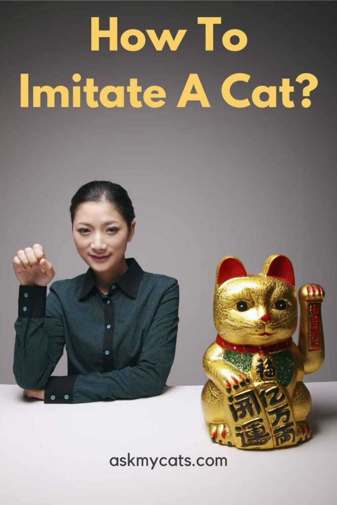 How To Imitate A Cat?