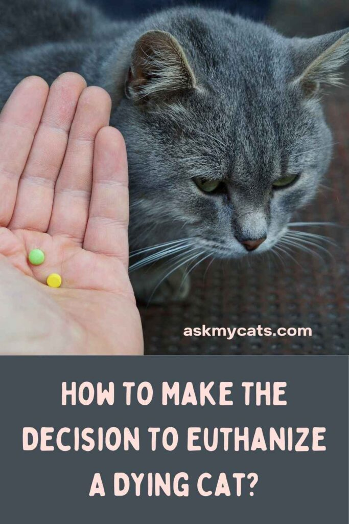 How To Make The Decision To Euthanize A Dying Cat?