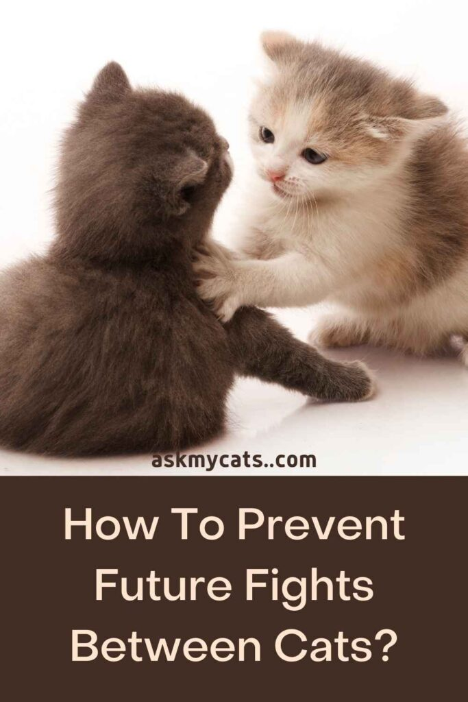 How To Prevent Future Fights Between Cats?
