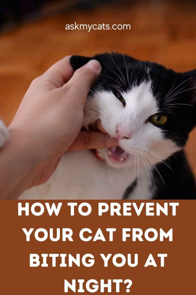 How To Prevent Your Cat From Biting You At Night?