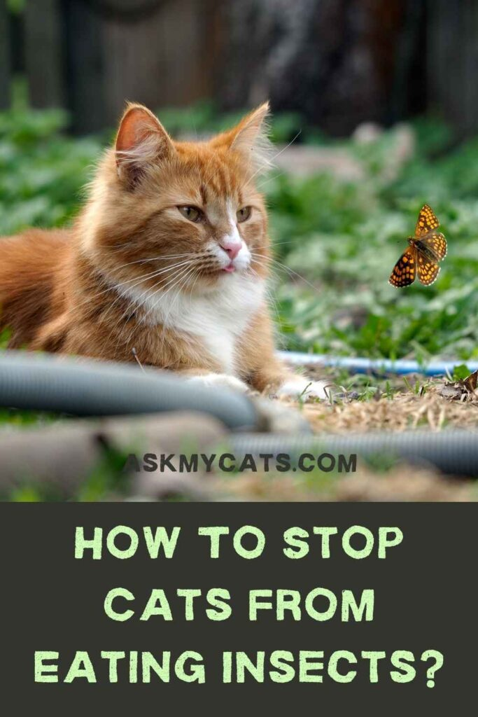 How To Stop Cats From Eating Insects?