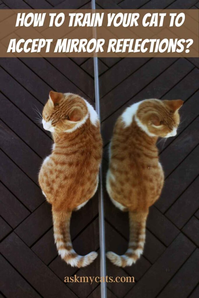 How to Train Your Cat to Accept Mirror Reflections?
